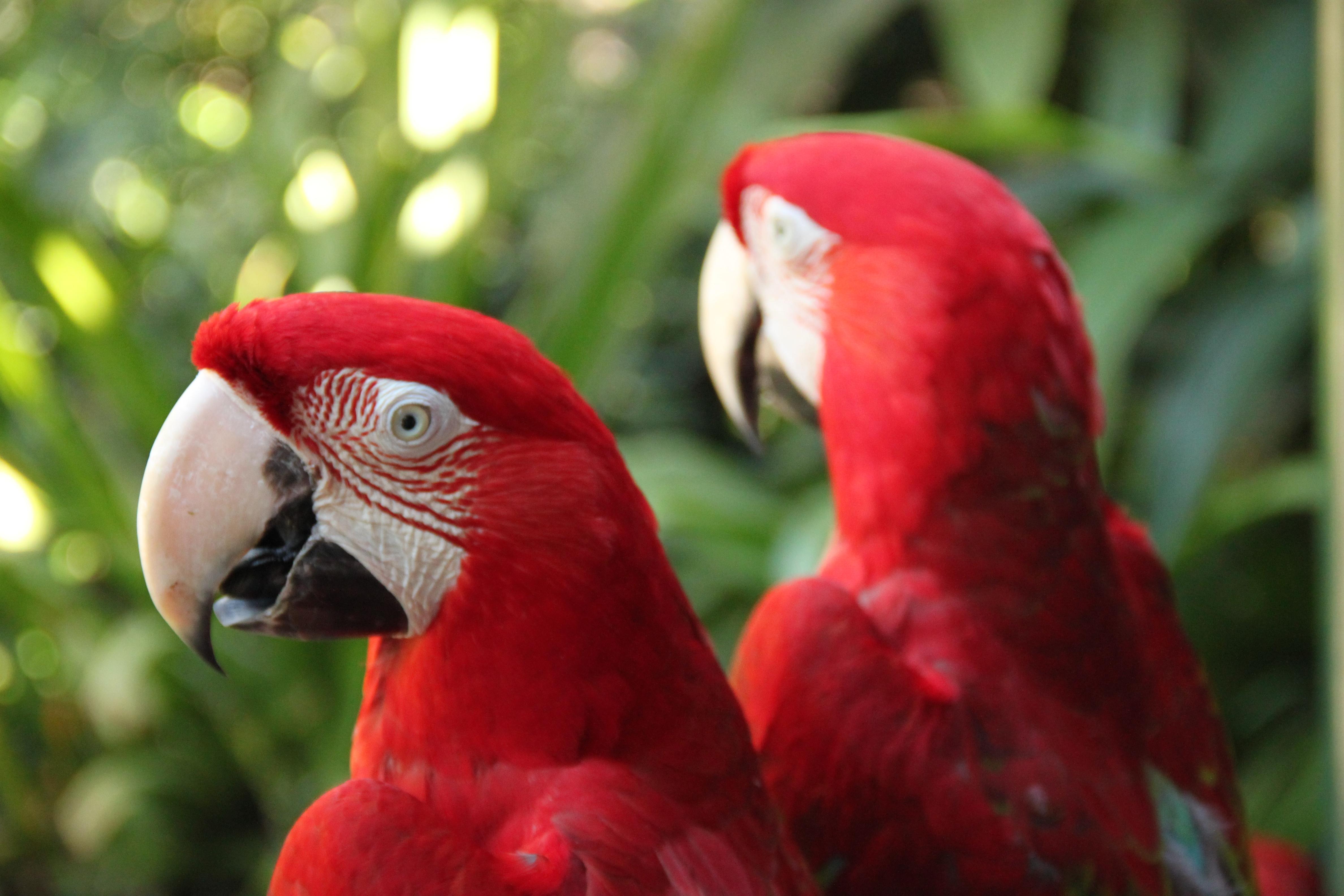 Duplicate Content Parrots
